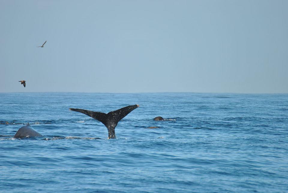 balena monterey california