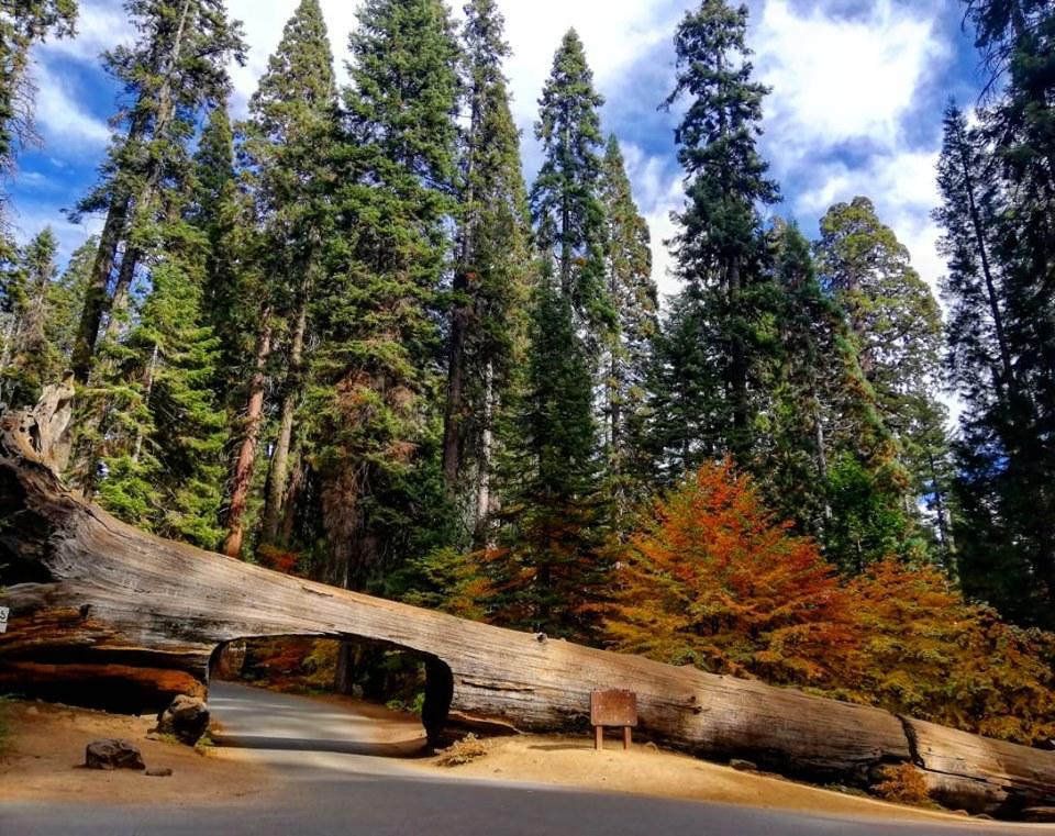 sequoia rovesciata park