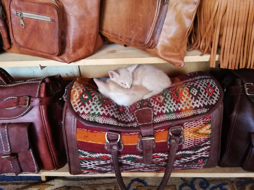 gatti pelle fes randagi marocco